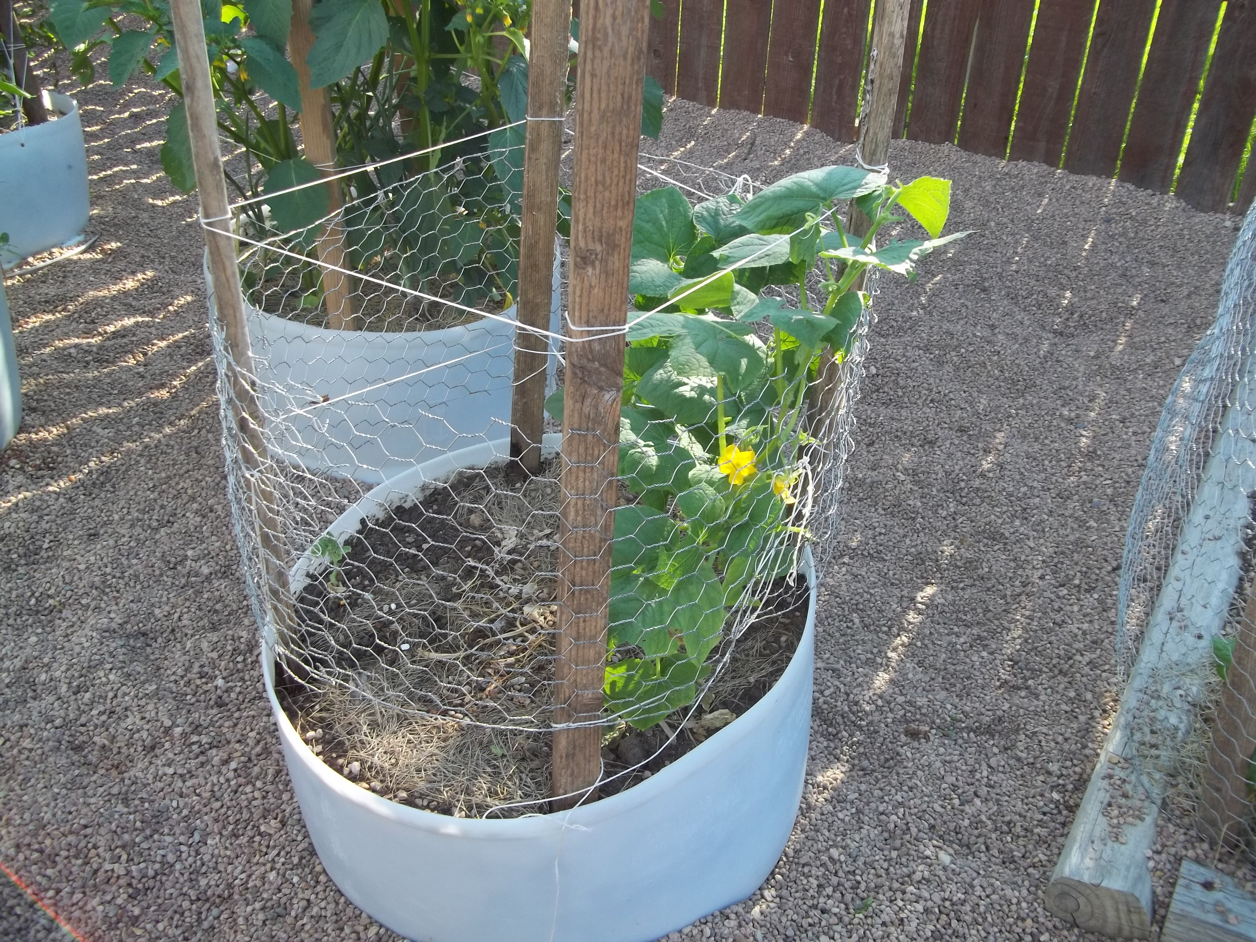 trellis | His and Hers Homesteading
